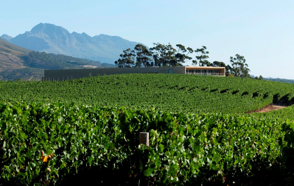 5 Glenelly cellar and vineyards (Large)