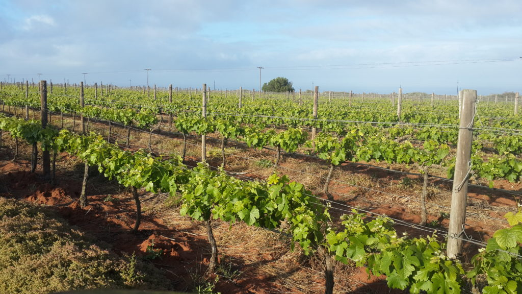 Fryer's cove wine farm
