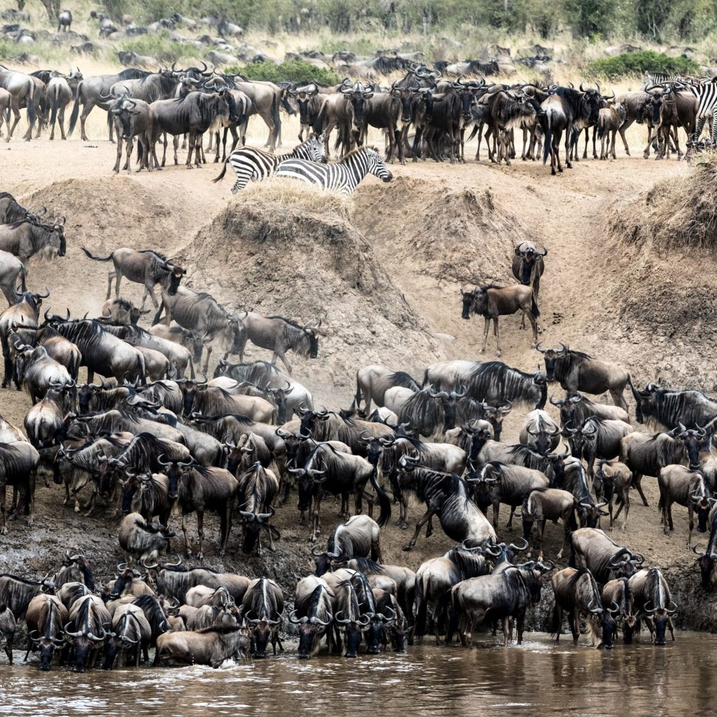 Serengeti Explorer Camp_Great Migration