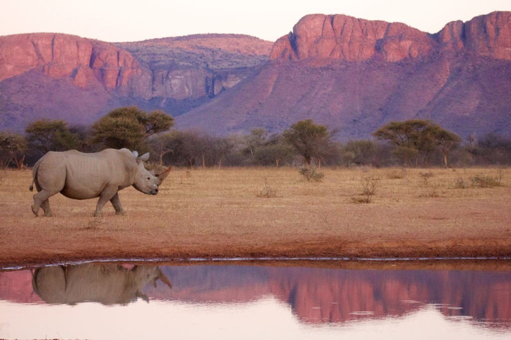 PRESTIGE_Travel_Marataba TRAVEL Prestige magazine South African Five-Star Lifestyle Hotel Luxury Destination International Top Exclusive Properties African First Class Once in a lifetime Honeymoon World expenxive vacations Tailor Made Island breakaways