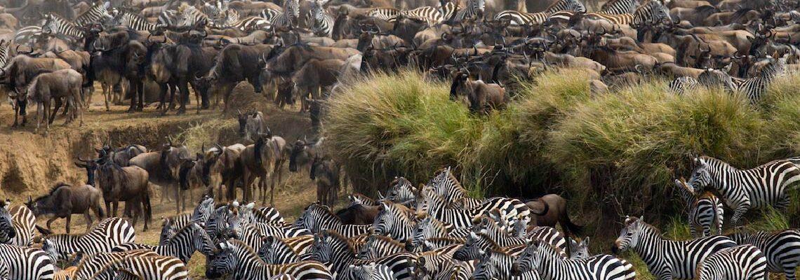 Serengeti Luxury Tented Camp Returns