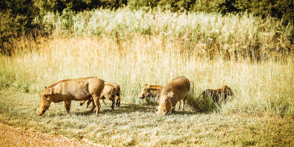 Wildlife in  Blair Atholl Golf and Equestrian Estate