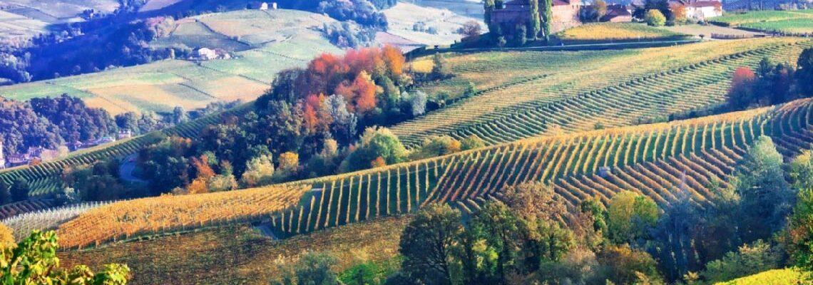 Barolo Vs Barbaresco Wines